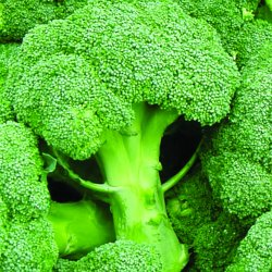 Broccoli BIO 100g MP